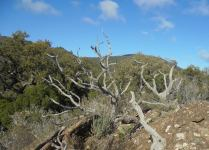 balisage arbre